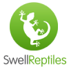 Swell Reptiles