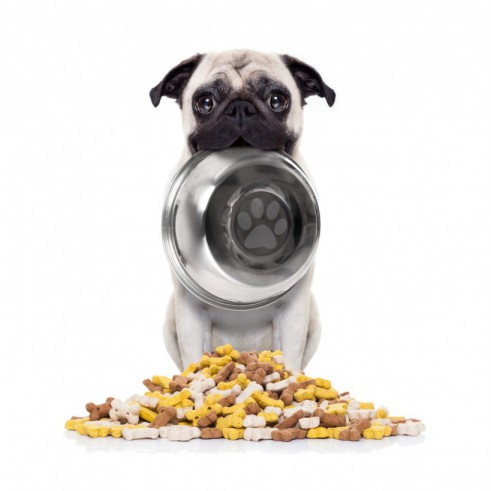 cashback on zooplus dog food