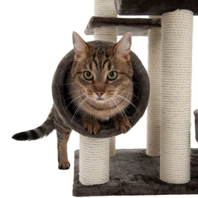 cashback on zooplus cat toys